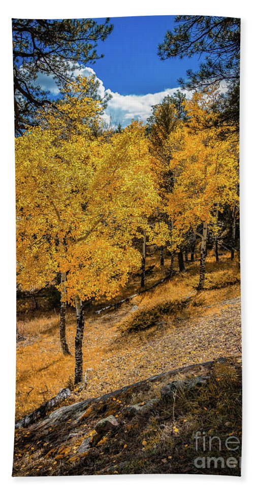 Jon Burch Bath Sheet featuring the photograph Yellow Trees by Jon Burch Photography