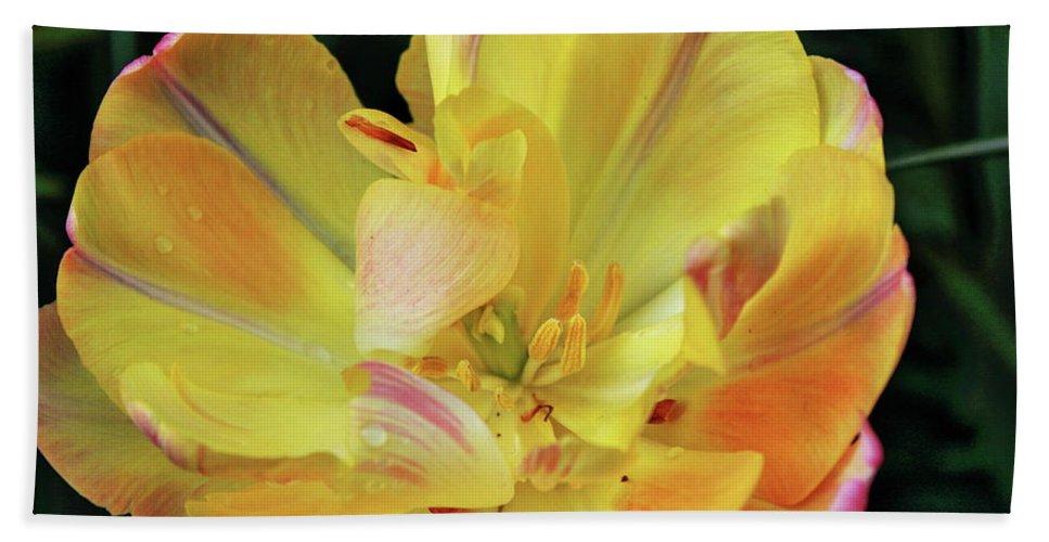 Tulip Bath Sheet featuring the photograph Yellow Tulip by Daniel Koglin