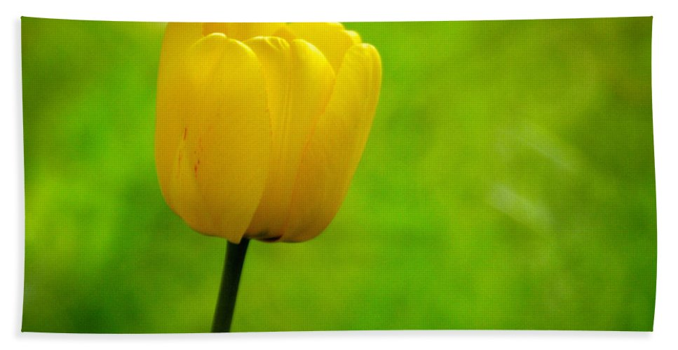 Lehtokukka Hand Towel featuring the photograph Yellow Tulip by Jouko Lehto