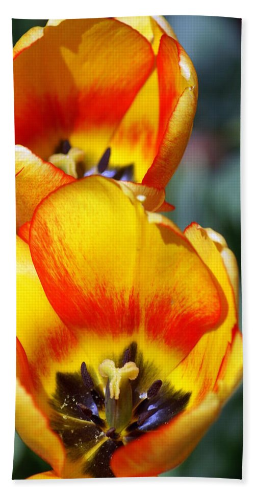 Flower Hand Towel featuring the photograph Yellow Tulip by Marty Koch