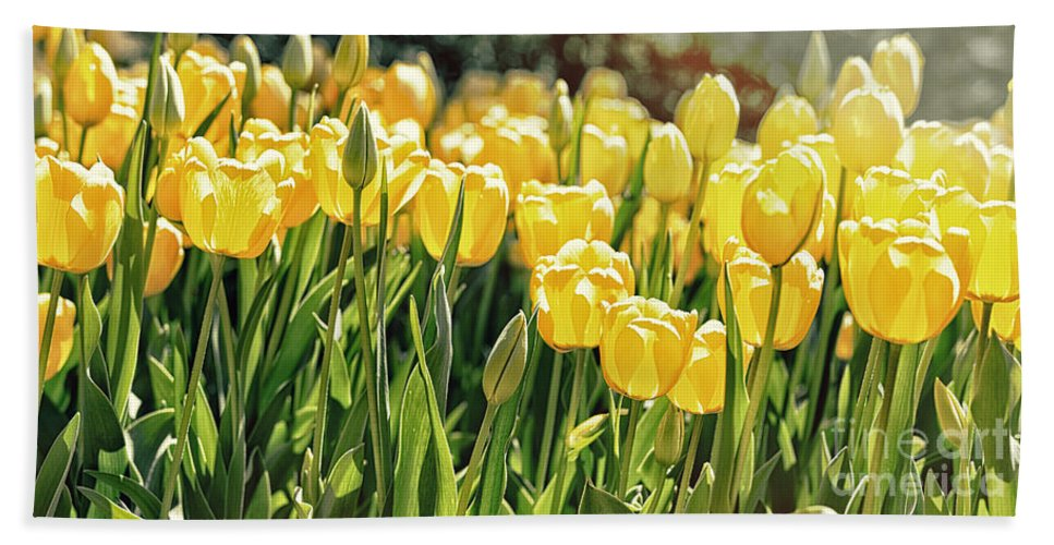 Nature Hand Towel featuring the photograph Yellow Tulip Panoramic by Tom Gari Gallery-Three-Photography