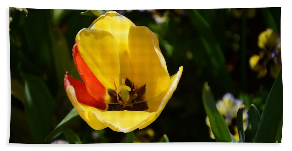 Hand Towel featuring the painting Yellow Tulip With Red Stripe by Constance Woods