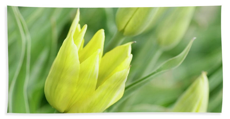 Tulip Hand Towel featuring the photograph Yellow Tulips by Svetlana Foote