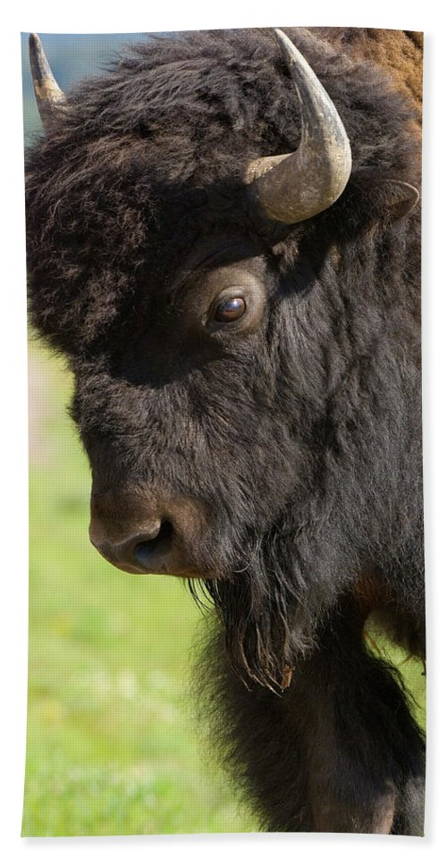 Bison Bath Sheet featuring the photograph Yellowstone Bison Portrait by Sandra Bronstein