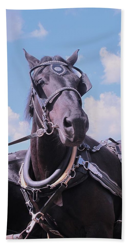 Percheron Hand Towel featuring the photograph Yes I Am The Most Beautiful by Ian MacDonald