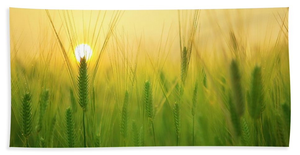 Sun Bath Sheet featuring the photograph You'll Remember Me When The West Wind Moves Upon The Fields Of Barley by Billy Soden