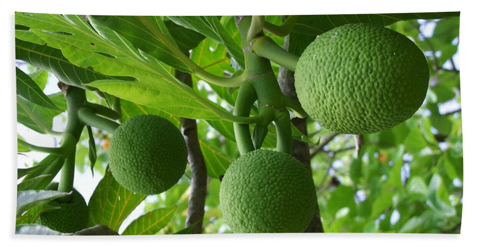 Breadfruit Hand Towel featuring the photograph Young Breadfruit by Mary Deal