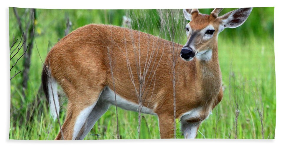 White Tail Deer Bath Sheet featuring the photograph Young Buck by Barbara Bowen