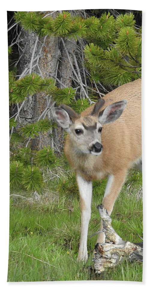 Deer Bath Sheet featuring the photograph Young Buck by Sandra O'Toole