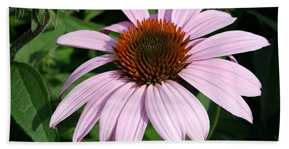 Purple Hand Towel featuring the photograph Young Echinacea Bloom by Tammy Finnegan