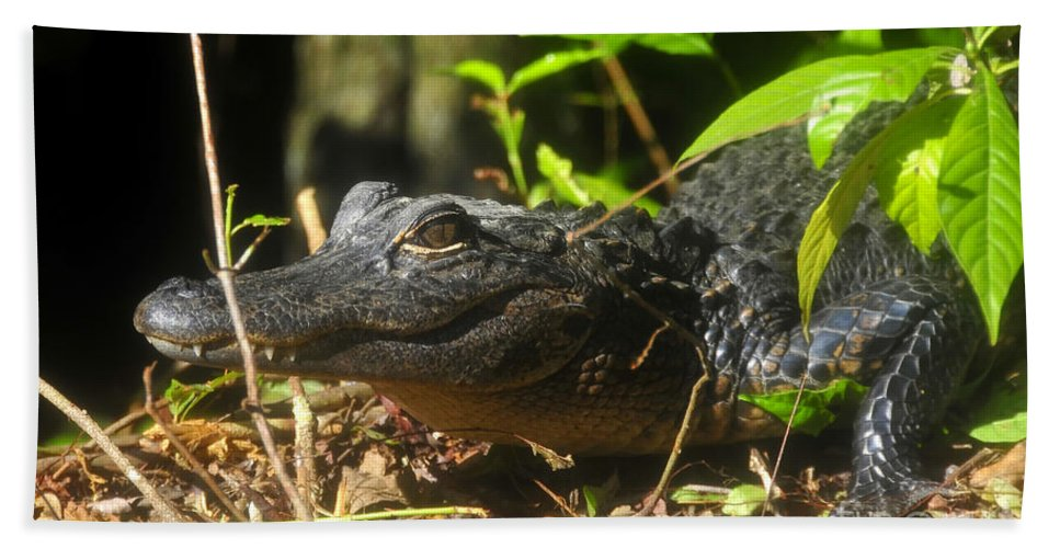 Alligator Hand Towel featuring the photograph Young Gator by David Lee Thompson
