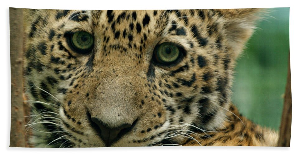 Jaguar Bath Sheet featuring the photograph Young Jaguar by Sandy Keeton