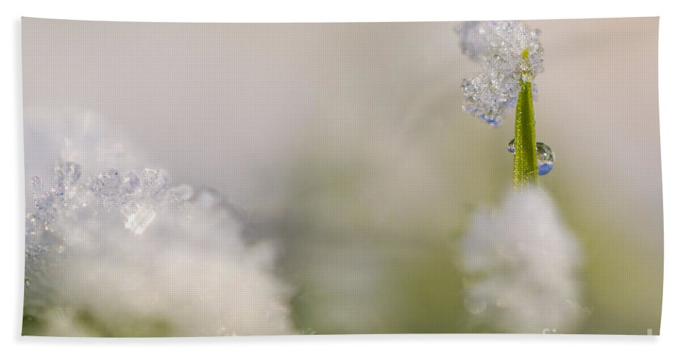 Hardship Hand Towel featuring the photograph Young Sapling Covered In Ice And Snow by Alon Meir