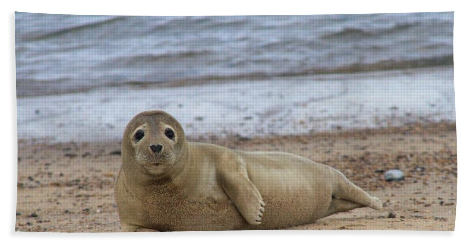 Seal Bath Towel featuring the photograph Young Seal Pup On Beach - Horsey, Norfolk, Uk by Gordon Auld