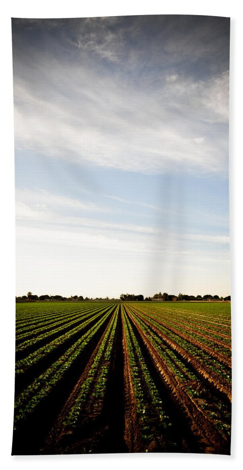 Lettuce Hand Towel featuring the photograph Yuma Fields by Scott Sawyer