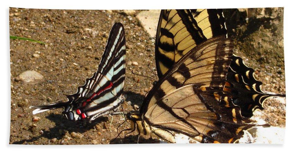 Long Tailed Zebra Butterfly Images Tiger Swallow Tail Butterfly Images Maryland Butterfly Prints Yellow Butterfly Images Entomology Forest Ecology Biodiversity Nature Rare Butterfly Prints Rare Butterfly Images Habitat Conservation Bath Sheet featuring the photograph Zebra And Tigers by Joshua Bales