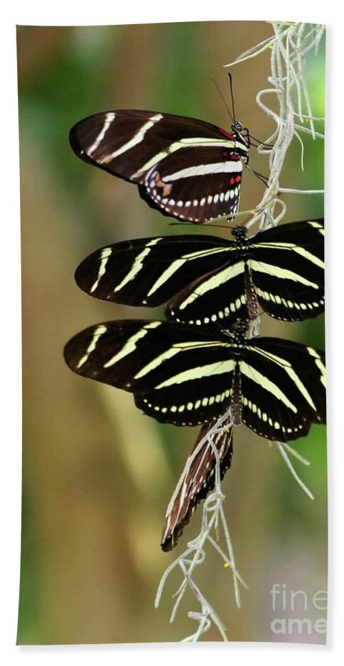 Zebra Hand Towel featuring the photograph Zebra Butterflies Hanging On by Sabrina L Ryan