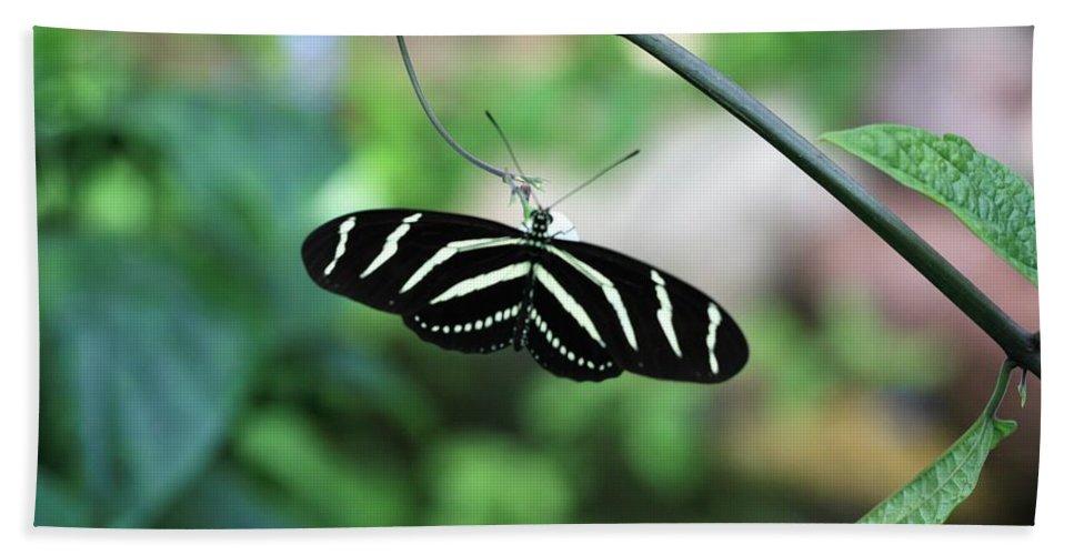 Butterfly Bath Sheet featuring the photograph Zebra Butterfly by Kristina Jones