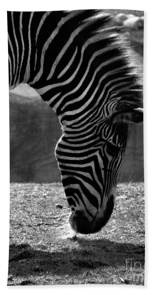 Zebra Bath Sheet featuring the photograph Zebra by September Stone