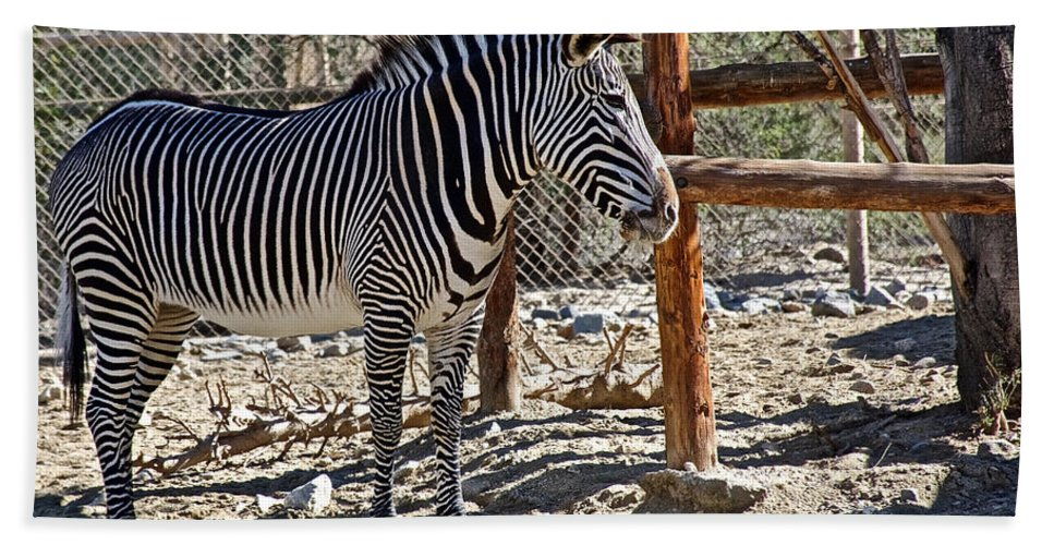 Zebra In Living Desert Zoo And Gardens In Palm Desert Hand Towel featuring the photograph Zebra In Living Desert Zoo And Gardens In Palm Desert-california by Ruth Hager
