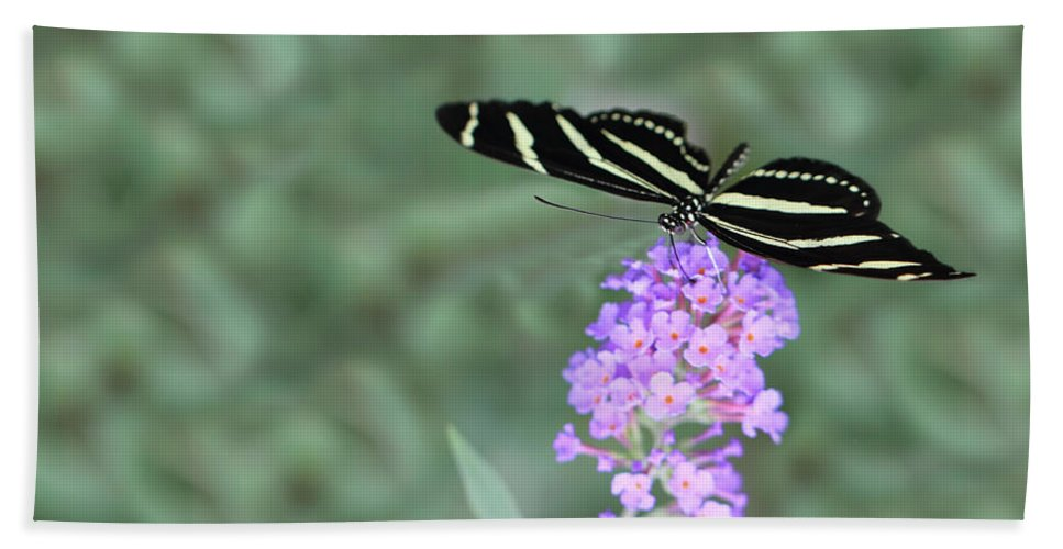 Nature Bath Sheet featuring the photograph Zebra Longwing Butterfly by Shelley Neff