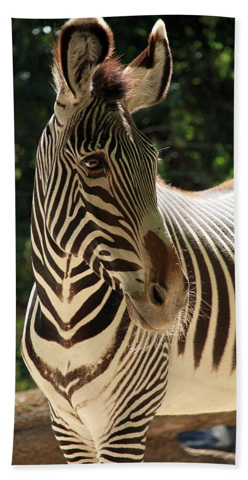 Zebra Hand Towel featuring the photograph Zebra Portrait by Aidan Moran