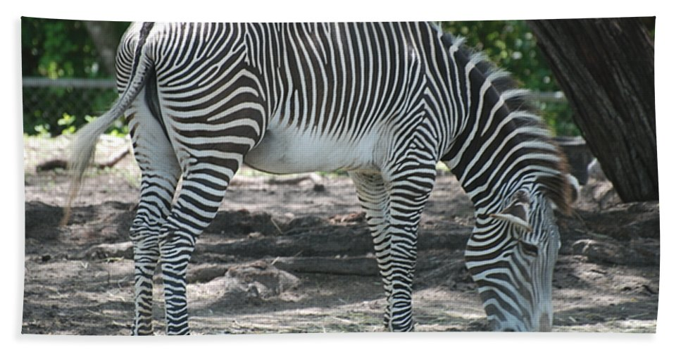 Animal Bath Sheet featuring the photograph Zebra by Rob Hans