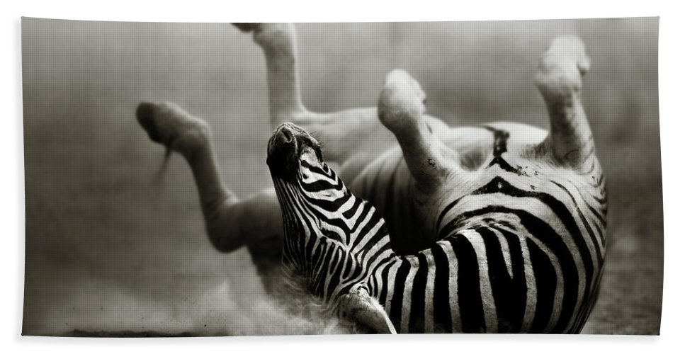 Zebra Bath Sheet featuring the photograph Zebra Rolling by Johan Swanepoel