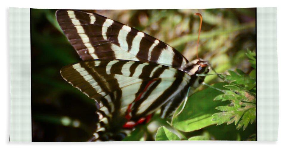 Zebra Swallowtail Butterfly Bath Sheet featuring the photograph Zebra Swallowtail Butterfly by Kerri Farley