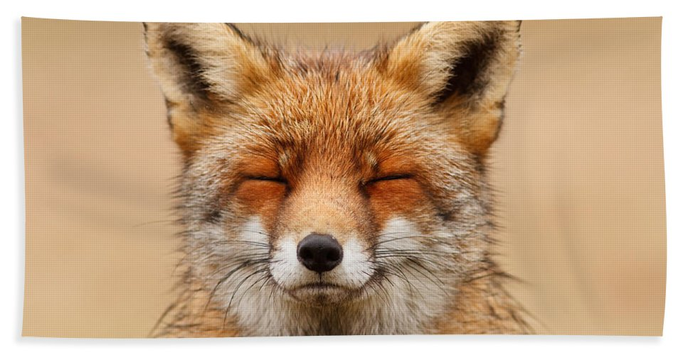 Red Fox Hand Towel featuring the photograph Zen Fox Red Fox Portrait by Roeselien Raimond