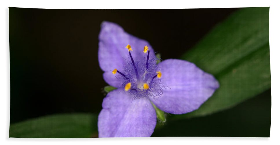 Zigzag Hand Towel featuring the photograph Zigzag Spiderwort by Jack R Perry