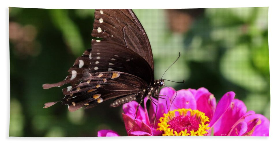 A Butterfly Perches Atop A Pink Zinnia To Sample Its Nectar. Hand Towel featuring the photograph Zinnia Visitor 4 by Angela Rath