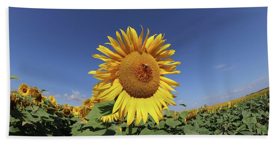 Sunflower Bath Towel featuring the photograph Bee On Blooming Sunflower by Michal Boubin