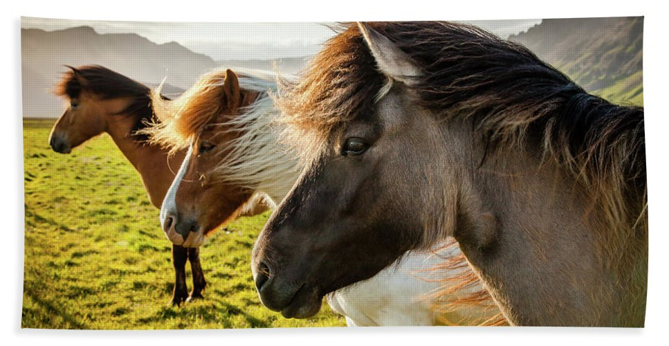 Iceland Hand Towel featuring the photograph Icelandic Horses by Peter OReilly