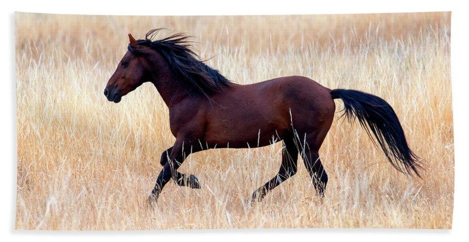 Mustang Stallion Hand Towel featuring the photograph Mustang Gallop by Mike Dawson