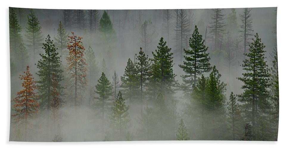 Forest Hand Towel featuring the photograph Trees In Yosemite by Jon Glaser