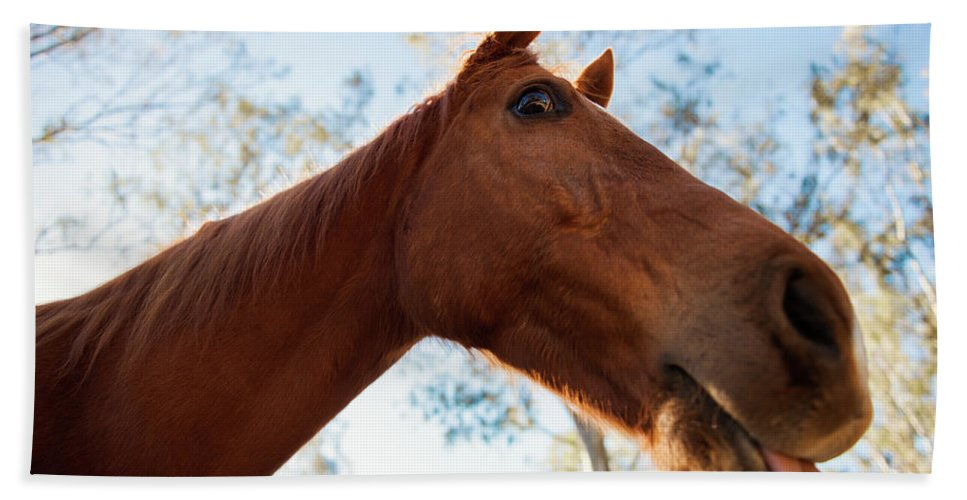 Animal Bath Towel featuring the photograph Horse In A Countryside by Rob D Imagery