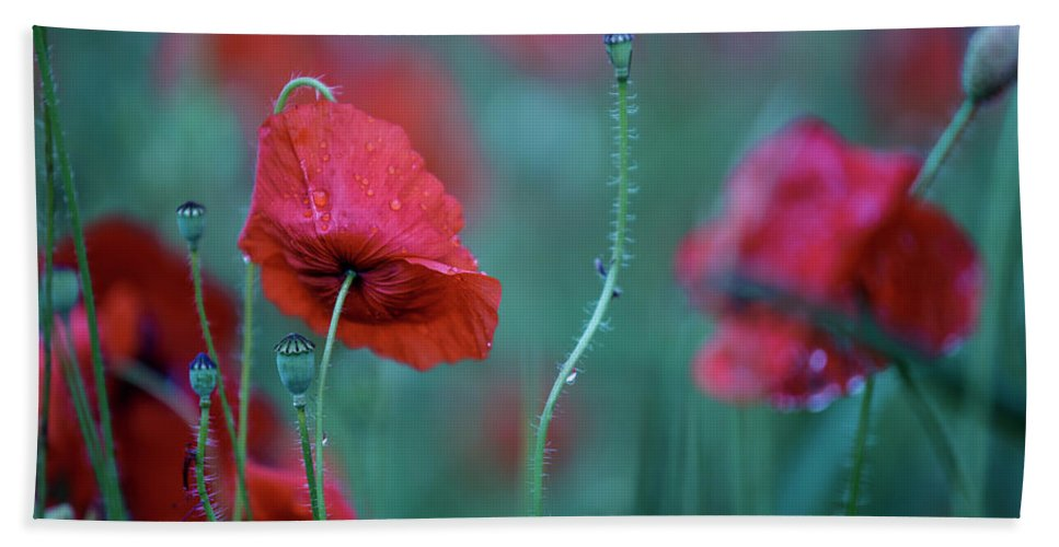 Poppy Bath Towel featuring the photograph Red Corn Poppy Flowers by Nailia Schwarz