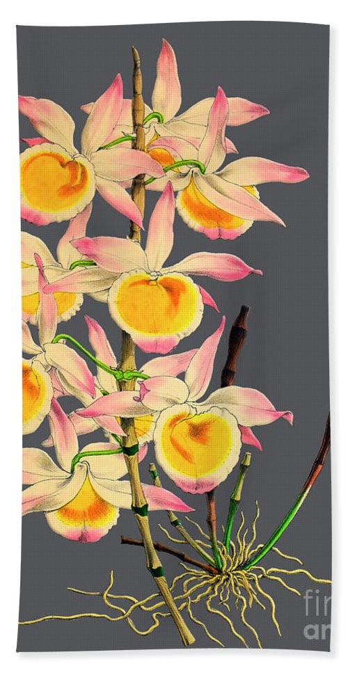 Vintage Bath Sheet featuring the digital art Orchid Old Print by Baptiste Posters