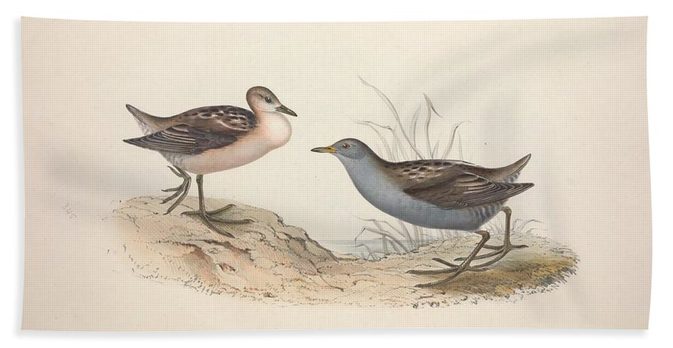 Nature Bath Towel featuring the painting Different Types Of Birds Illustrated By Charles Dessalines D Orbigny 1806-1876 21 by Charles Dessalines D Orbigny