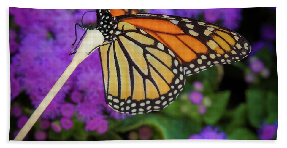 Flower Bath Towel featuring the photograph A Monarch's Lunch by Gina Matarazzo
