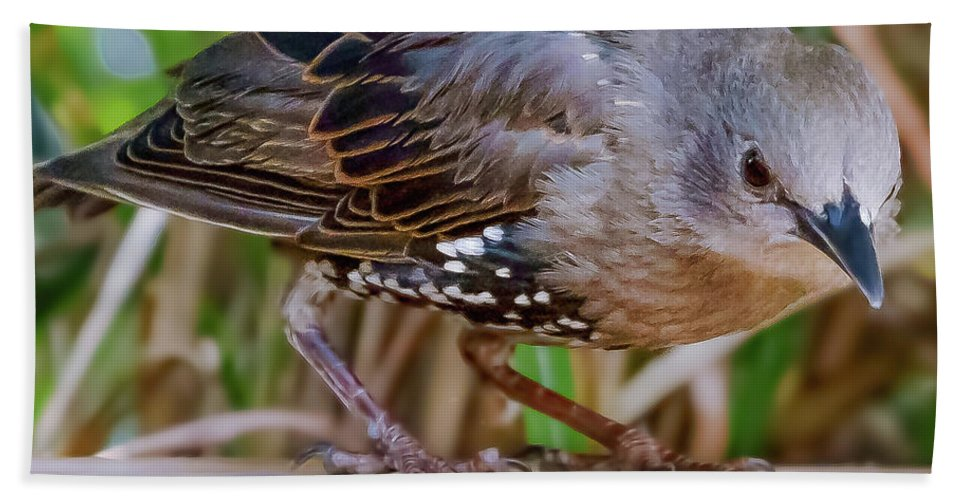 Bird Bath Towel featuring the photograph Angry Bird by Joel Friedman