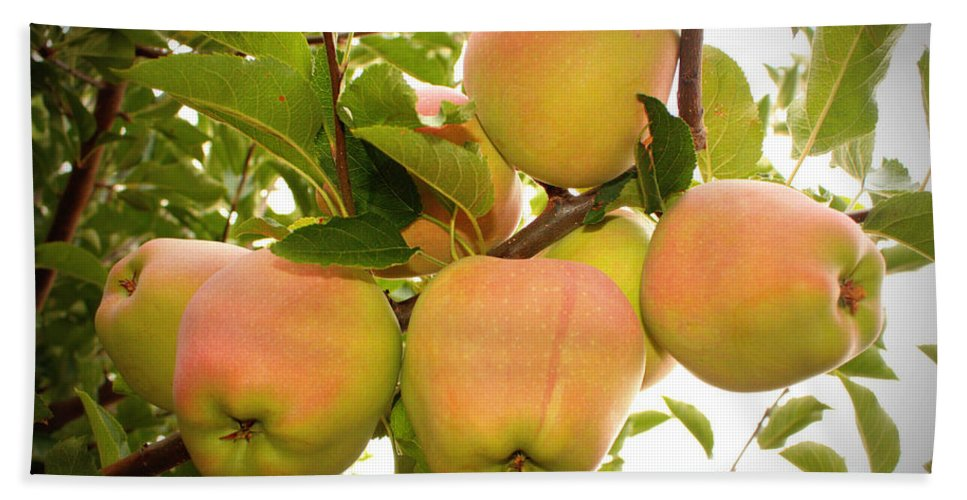 Fruits Bath Towel featuring the photograph Backyard Garden Series - Apples In Apple Tree by Carol Groenen