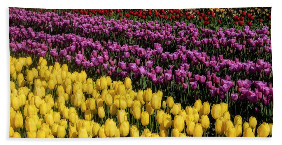 Tulip Bath Towel featuring the photograph Beauteous Tulip Fields by Garry Gay