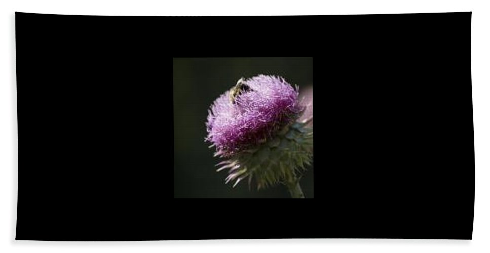 Bee Bath Towel featuring the photograph Bee On Thistle by Nancy Ayanna Wyatt