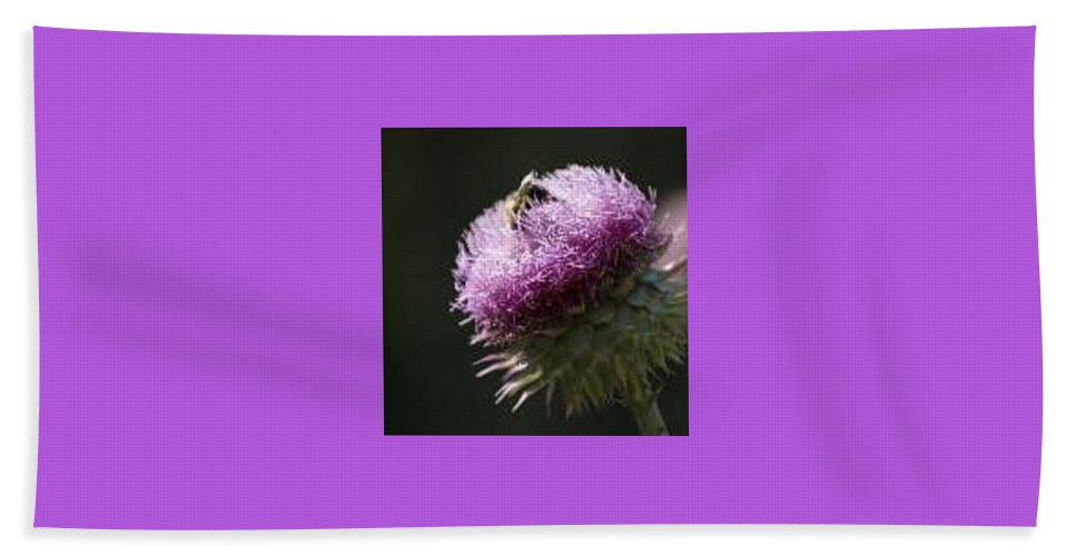 Bee Hand Towel featuring the photograph Bee On Thistle by Nancy Ayanna Wyatt