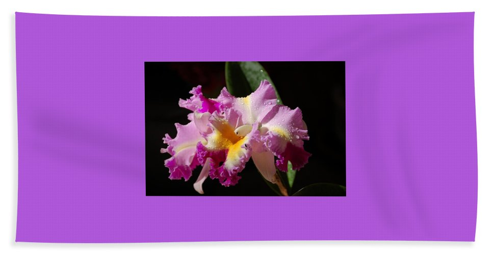 Orchid Hand Towel featuring the photograph Best Cattleya by Nancy Ayanna Wyatt