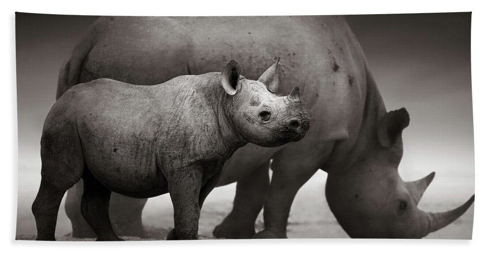 Wild Bath Towel featuring the photograph Black Rhinoceros Baby And Cow by Johan Swanepoel
