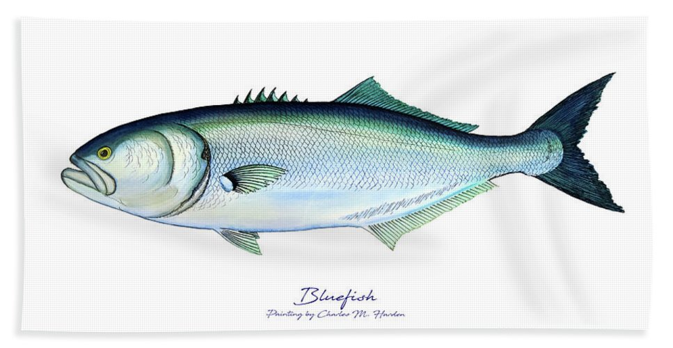 Charles Hand Towel featuring the painting Bluefish by Charles Harden