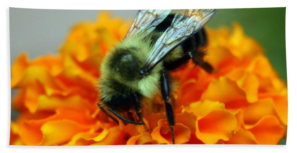 Insect Bath Towel featuring the photograph Busy As A Bee by Laurel Talabere
